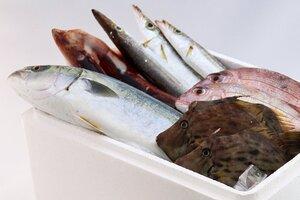 氷見の旬のお魚 お試しセット