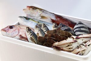 氷見の旬のお魚 おすすめセット