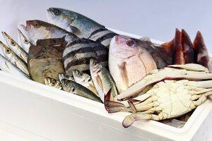 氷見の旬のお魚 特選セット