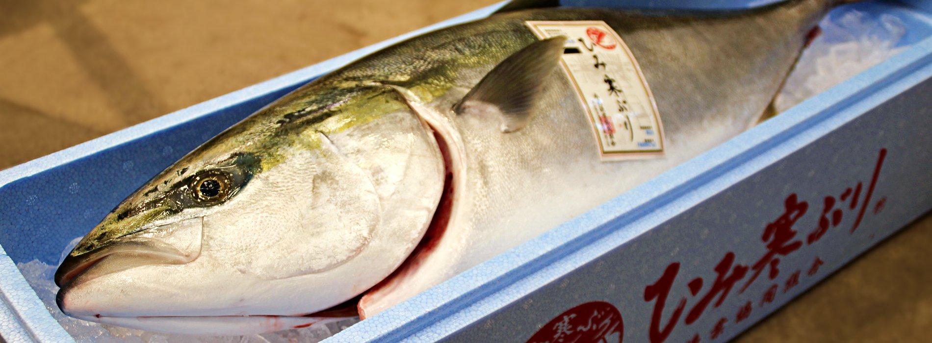 氷見の魚の王様 ひみ寒ぶり